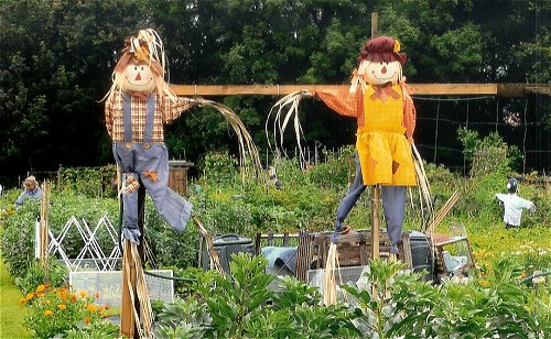 Allotment for kids