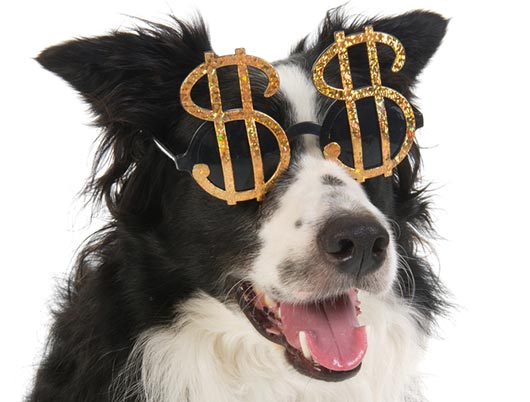 Cost-of-Owning-a-Dog
