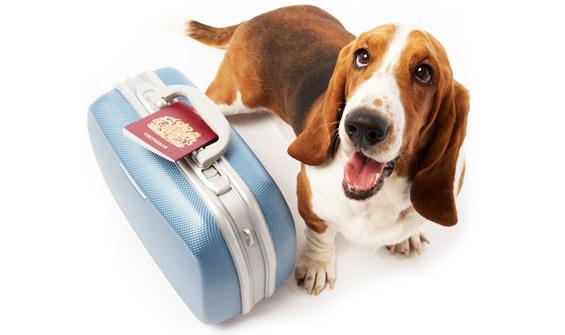 taking dog on holiday Should I Get a Dog?