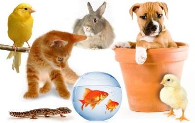 pets What Are the Cheapest Family Pets?