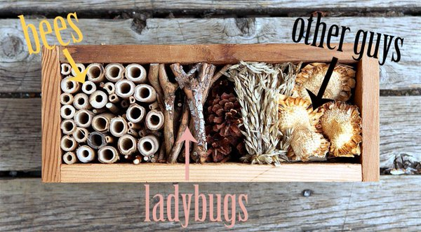 Bug Hotel Fun Family Garden Ideas on a Budget